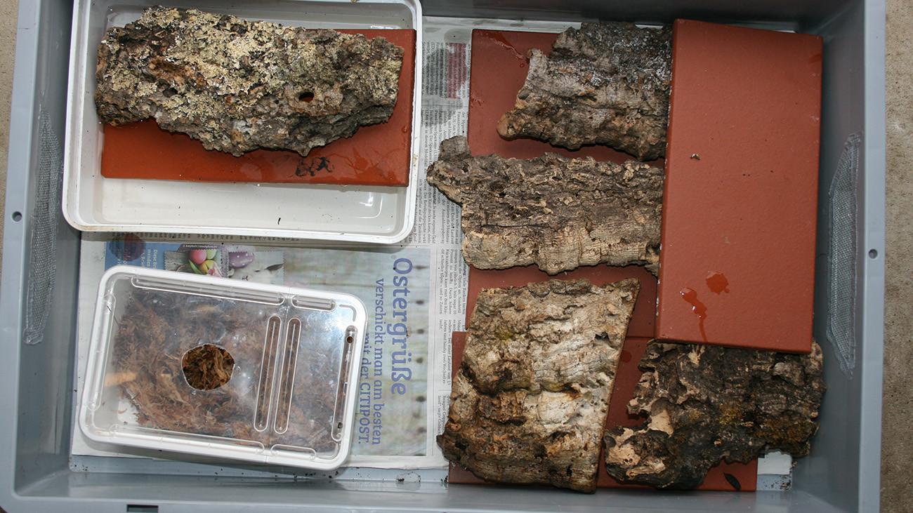 Diese Salamander-Einfamilienhaussiedlung ist nach dem immer selben Prinzip aufgebaut: Bodengrund Zeitungspapier, Versteckmöglichkeiten unter Steinen und Rinde, eine sogenannte Feuchtbox mit Moos und ein Badebecken. | Uwe Seidel