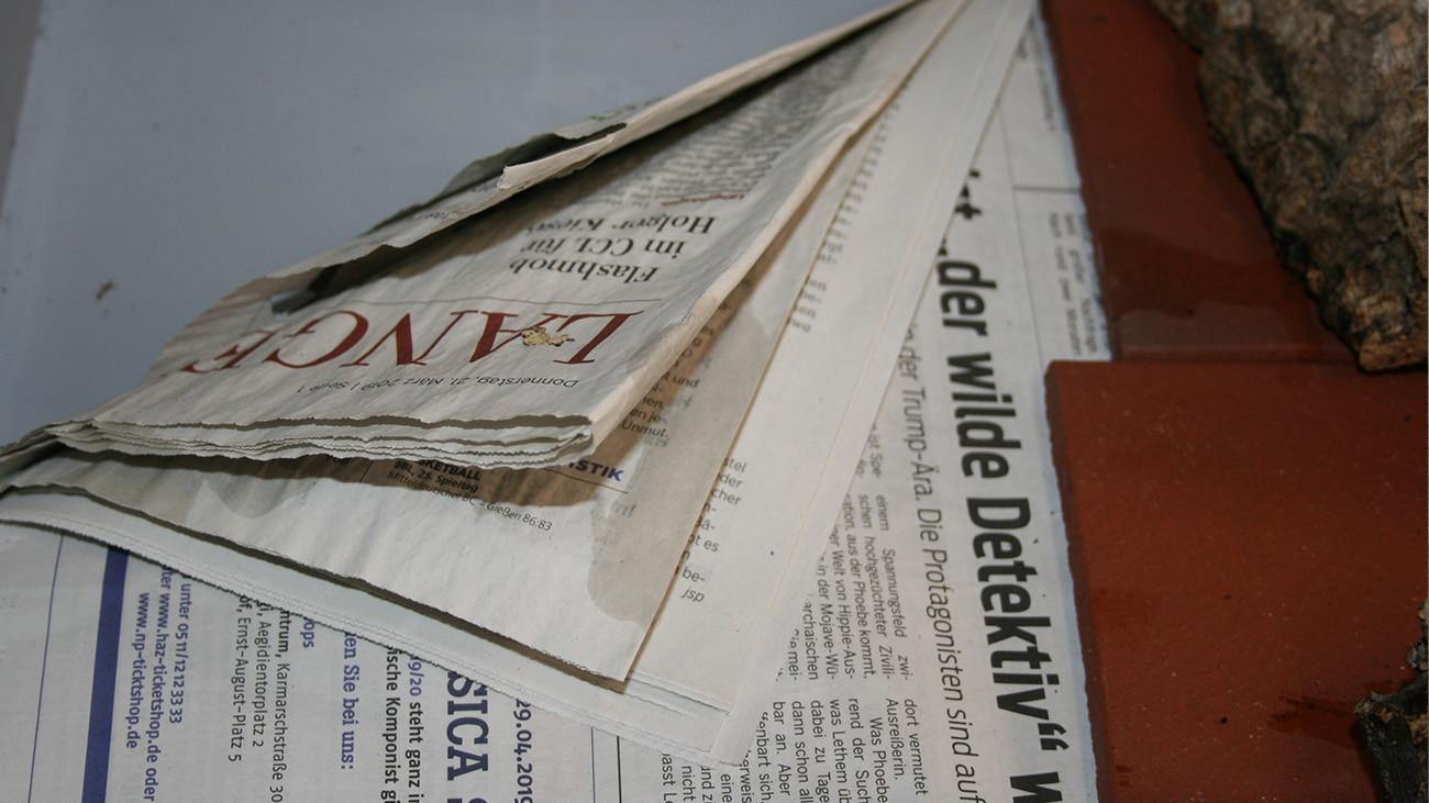 Zeitungspapier ist aus Cellulose – genau wie Laub. Dieses wird nur äußerst dürftig mit Wasser besprüht – Feuersalamander mögen es eher trocken – und alle zwei Wochen ausgetauscht. | Uwe Seidel