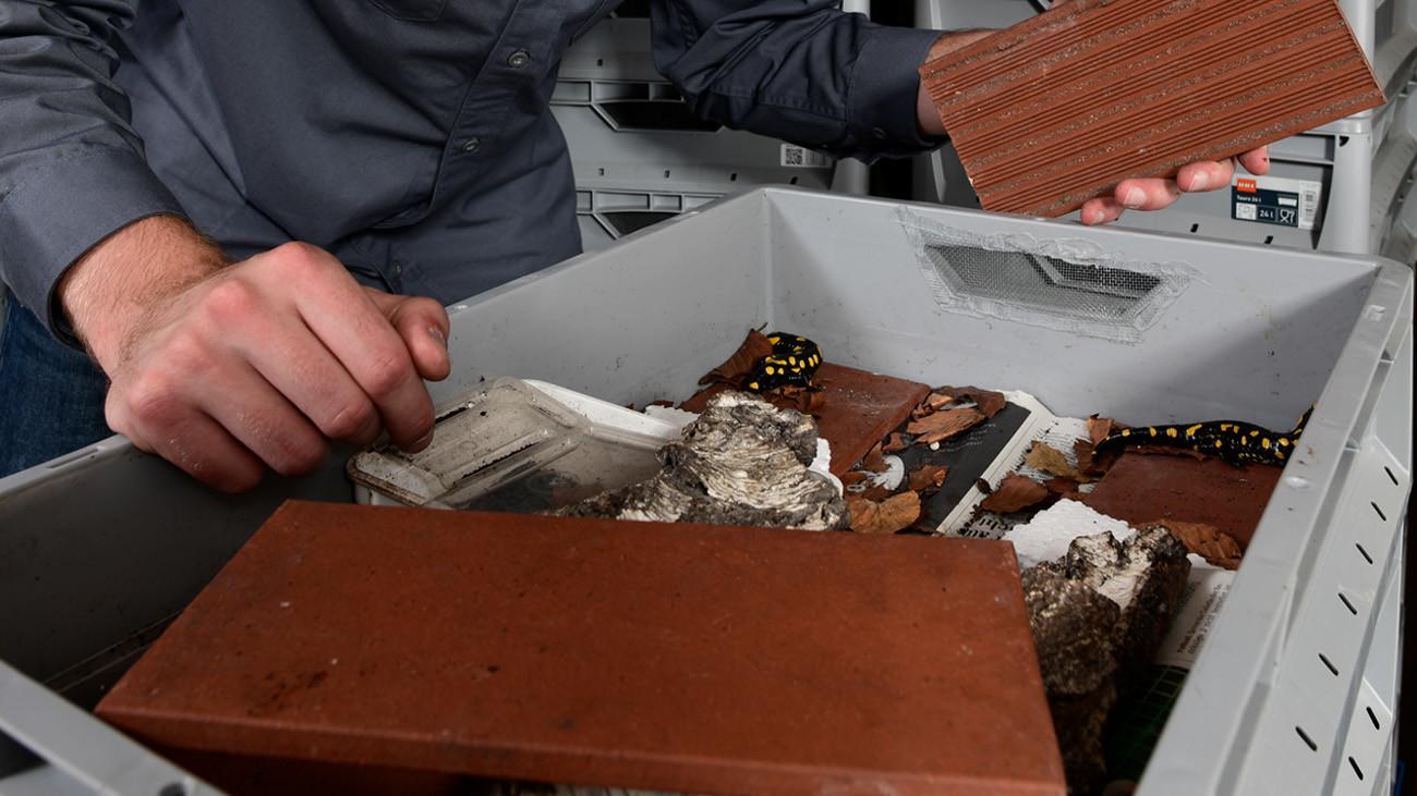 Jeweils eine Zuchtgruppe von zwei bis drei Tieren bewohnt ein Stapelbox-Apartment. Licht dringt – wie im Unterholz des Waldes – nur seitlich durch die Lüftungsschlitze ein. Munter werden die nachtaktiven Tiere dann, wenn auch dieses erlischt. | Benny Trapp, Frogs & Friends