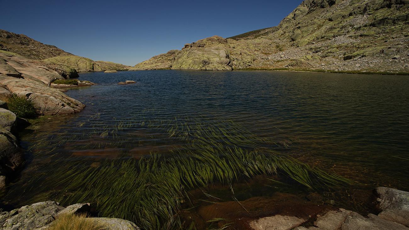 Die Seen und Bäche des Gebirges dienen den Almanzor-Feuersalamandern zum Absetzen der Larven. | Philip Gerhardt