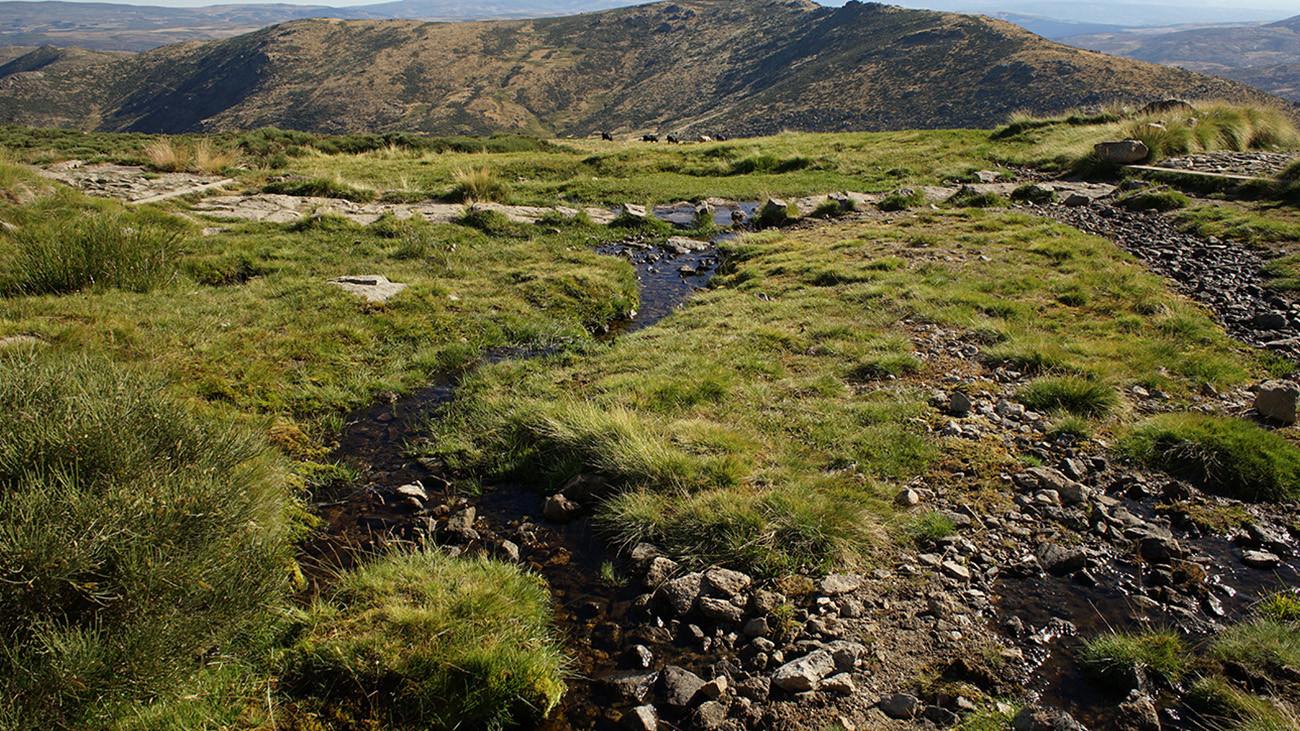 Kleine Bäche durchziehen die Gebirge; auch sie werden von den Salamandern für das Absetzen der Larven genutzt. | Philip Gerhardt