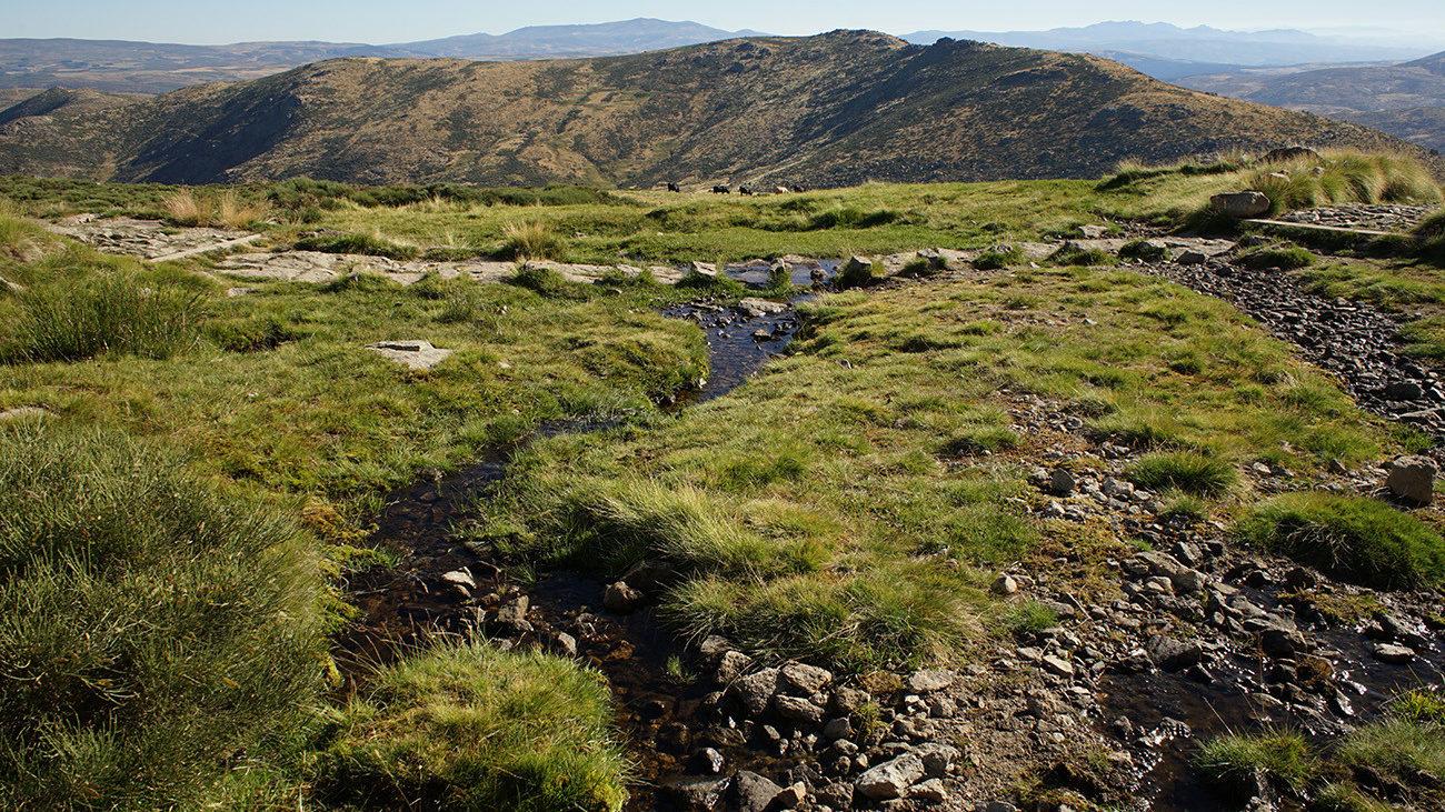 Small streams run through the mountains. The salamanders use them to deposit their larvae. | Philip Gerhardt