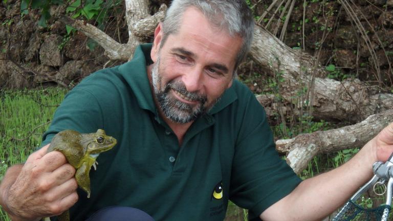Einsatz in aller Welt: In Indien arbeitet Thomas mit einer weiteren Amphibien-Art, die für den menschlichen Verzehr viel zu viel gefangen wird – den Asiatischen Ochsenfrosch, Hoplobatrachus tigerinus. | Doris Preininger