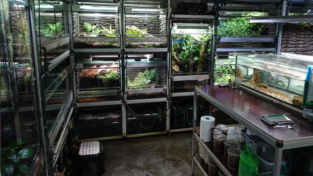 Approximately 20 species are being raised in the special amphibian breeding space in the Cologne Zoo. | Anna Rauhaus