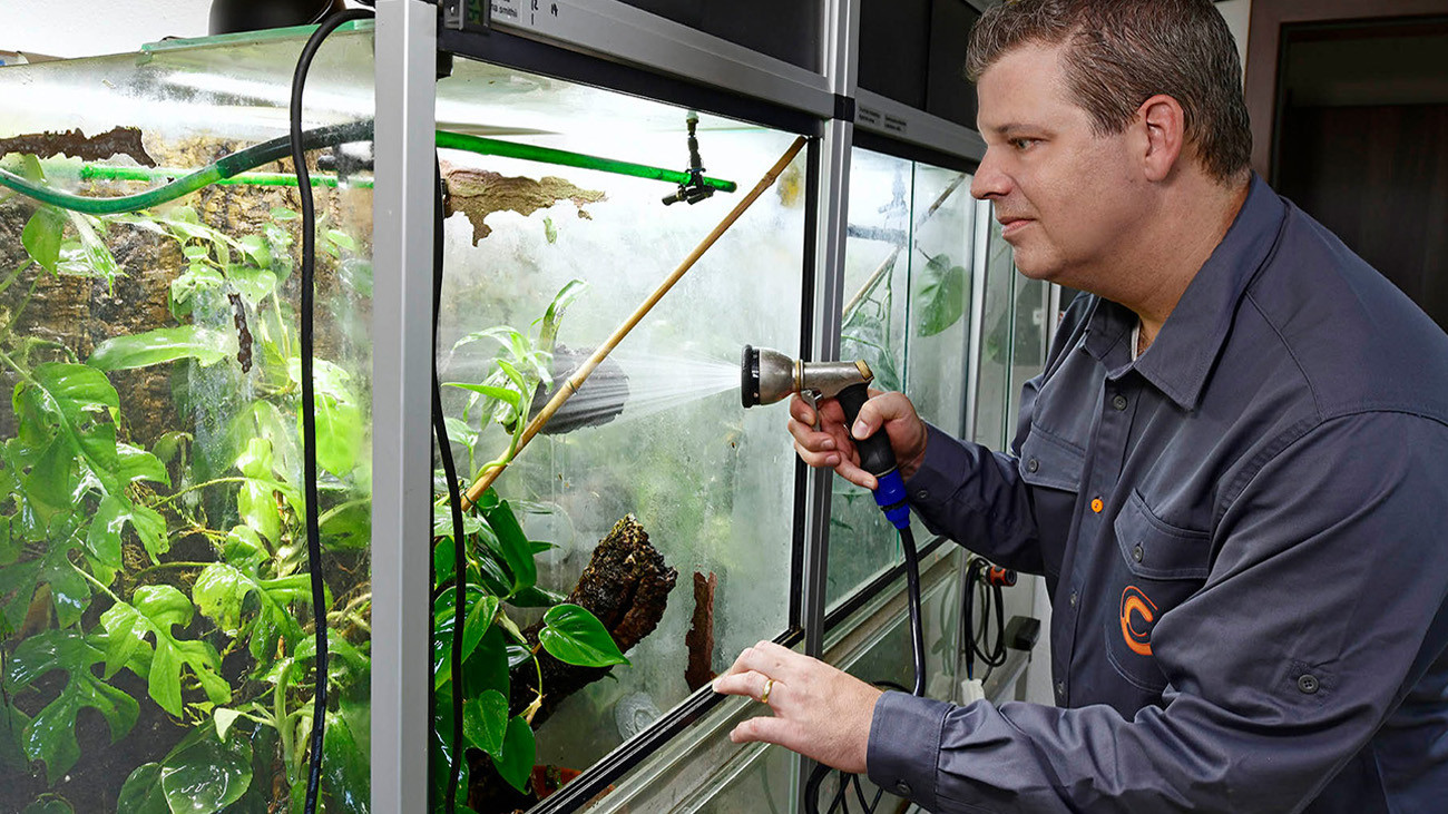 Tobias Eisenberg bei der Pflege seiner Lemur-Laubfrösche | Benny Trapp, Frogs & Friends