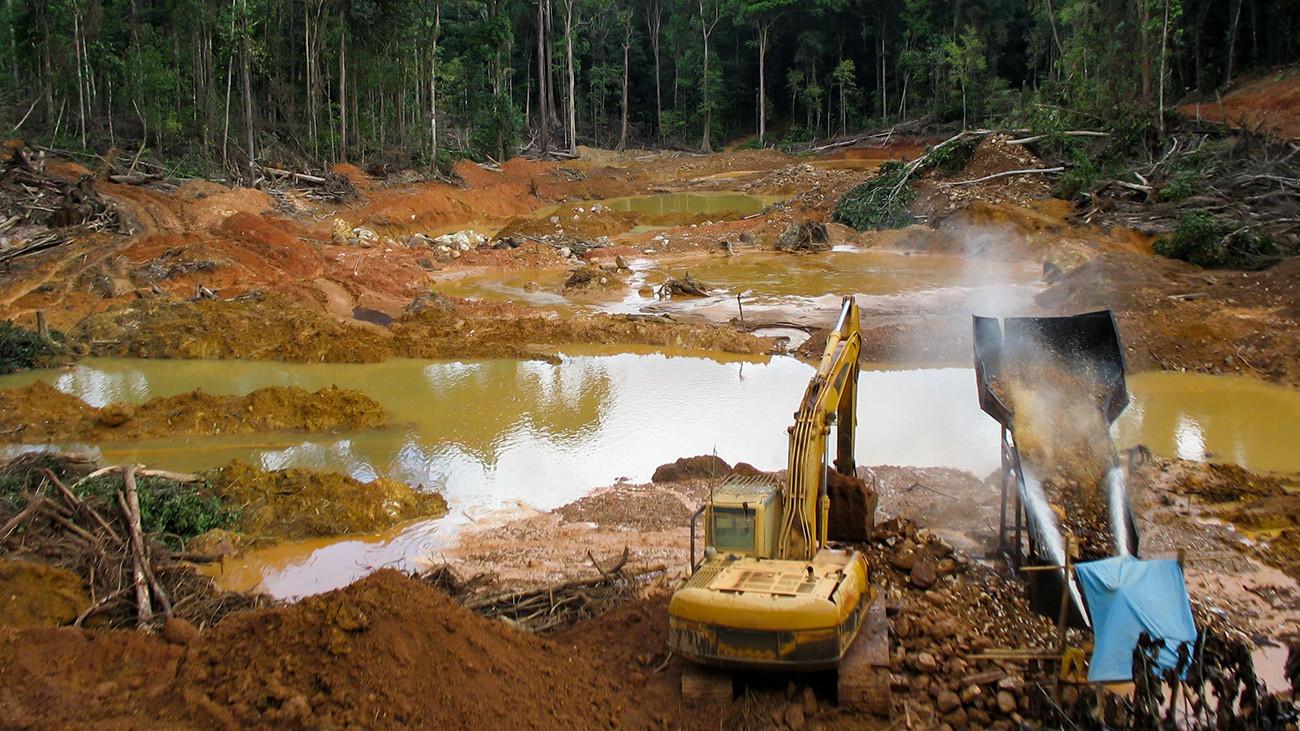 Mit schwerem Gerät rücken die Bergbaugesellschaften an und zerstören großflächig den Regenwald. | Kakteen, Shutterstock