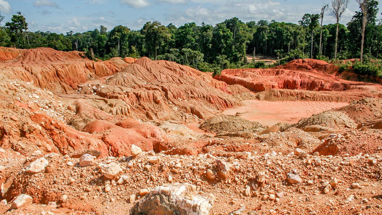 Verlassenes Goldsuchgebiet im Nachbarland Guyana. Für Frösche bleibt hier kein Platz. | Kakteen, Shutterstock