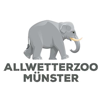 CC_Logo_Münster