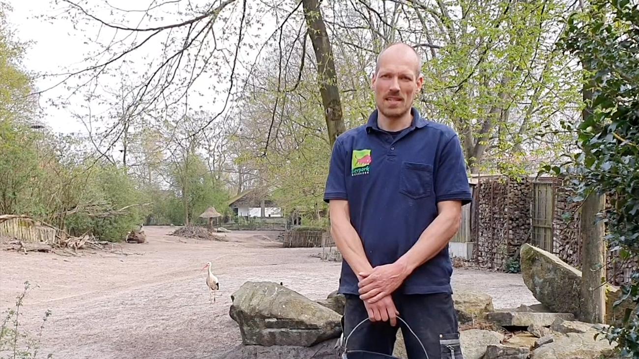Tom ten Tusscher vom Tierpark Nordhorn stellt Marabu Reinhold vor