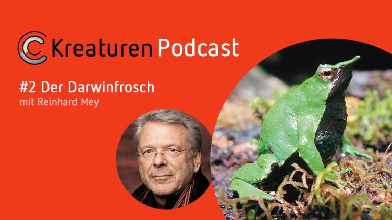 In Folge zwei beschreibt Liedermacher Reinhard Mey den wundersamen Darwinfrosch. Dessen Nachwuchs schlüpft aus dem Maul des Männchens.