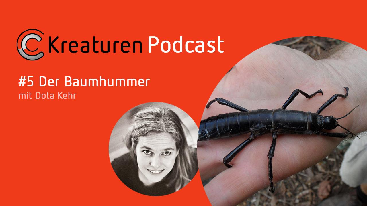In Folge 5 entdeckt Dota Kehr ein Wesen, das lange als ausgestorben galt: den Baumhummer.