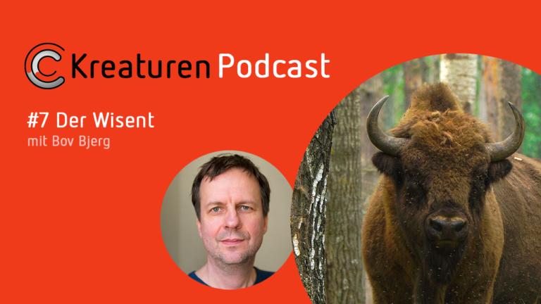 Was das Rothaargebirge mit den Wisenten zu tun hat, erzählt Schriftsteller Bov Bjerg in Folge 7.