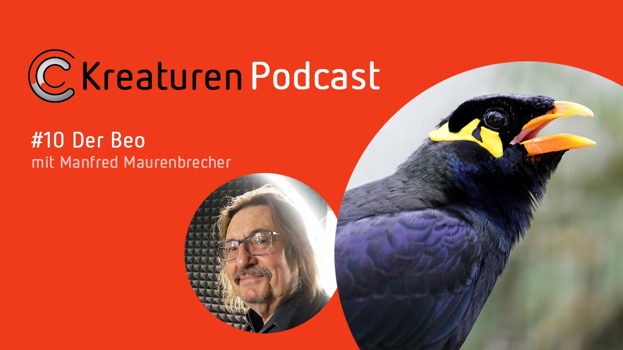Liedermacher Manfred Maurenbrecher geht in Folge 10 auf eine beeindruckende Quasselstrippe ein: den Beo.