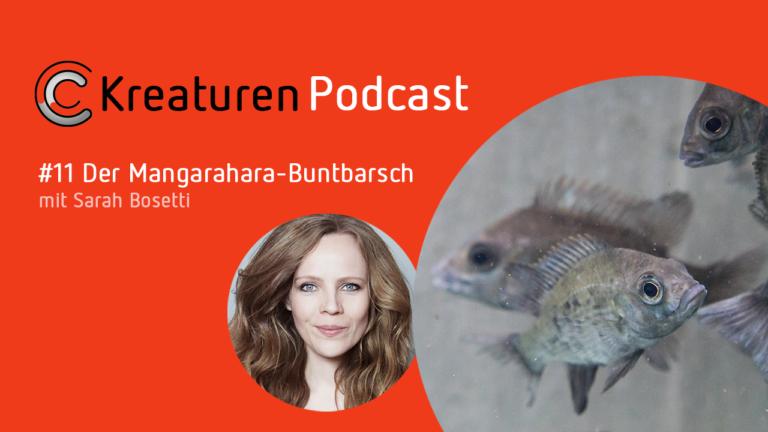 Die Kabarettistin und radioeins-Kolumnistin Sarah Bosetti erzählt in Folge 11 die Geschichte des Mangarahara-Buntbarsches und verrät, warum der Fisch so etwas wie das hässliche Entlein unter den Buntbarschen ist.