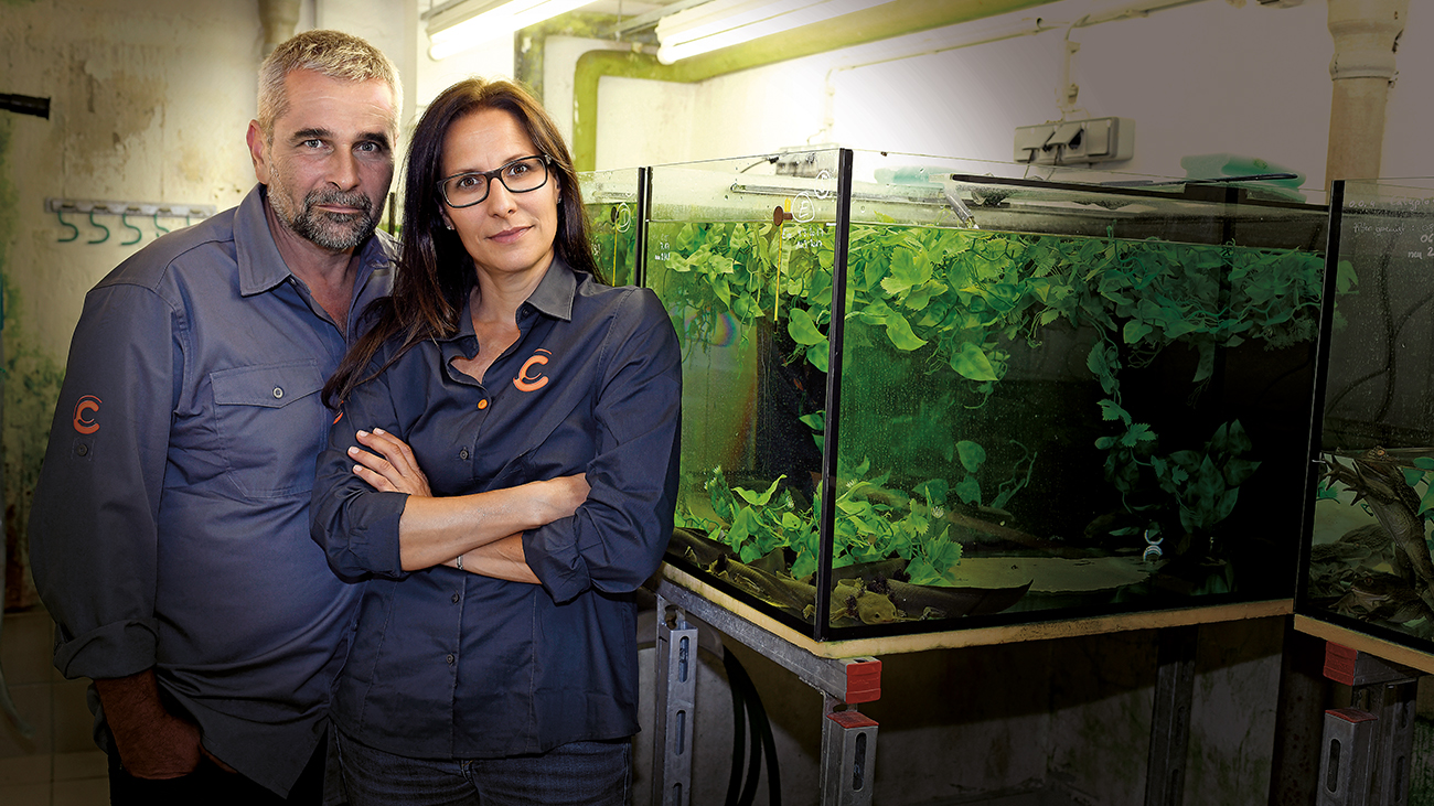 At Citizen Conservation, zoos and private keepers work together to save amphibians threatened by extinction through conservation breeding (pictured here Doris Preininger and Thomas Wampula from Vienna Zoo in front of an aquarium for the critically endangered Lake Pátzcuaro Salamander). The import of living amphibians has to remain possible also to keep projects such as this one running. | Benny Trapp, Frogs & Friends