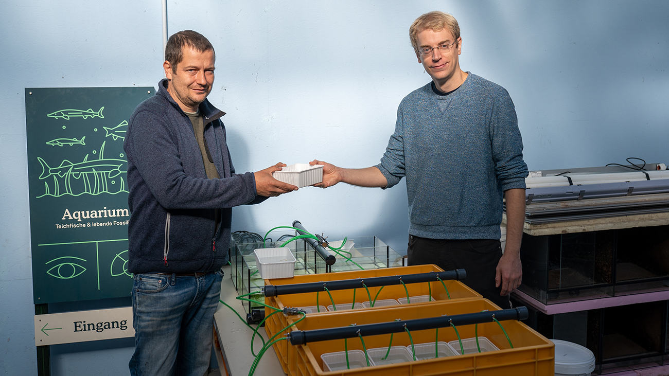 Cooperation between private and institutional breeders: David Kupitz hands over CC offspring of the Lake Patzcuaro Salamander that he bred to Holger Kraus from NaturaGart Ibbenbüren, a show facility with zoo permits for everything to do with garden ponds and freshwater aquariums.  Photo: NaturaGart Ibbenbüren