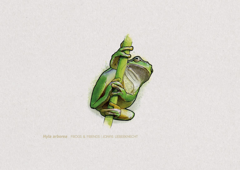 Nr. 1: Der europäische Laubfrosch (Hyla arborea)  | Jonas Lieberknecht(A6 Postkartenformat in Passepartout)