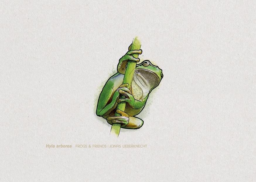 No. 1: European Tree Frog (Hyla arborea)  | Jonas Lieberknecht(A6 postcard format in picture mount)
