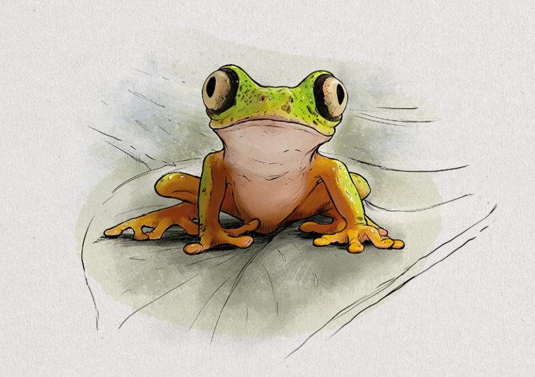 No. 7: Lemur Leaf Frog (Agalychnis lemur) | Jonas Lieberknecht