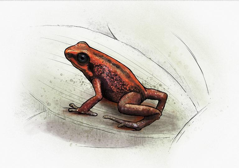 No. 6: Demonic Poison Frog (Minyobates steyermarki) | Jonas Lieberknecht