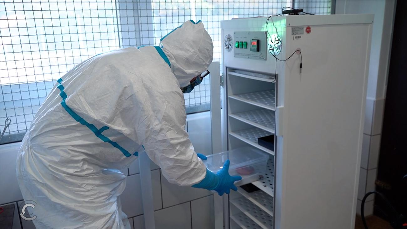 Zwei Wochen Wärmekammer mit anschließender vier-monatiger Quarantäneverwahrung, so lautet das lebensrettende Urteil der Nürnberger Veterinäre | Frogs & Friends