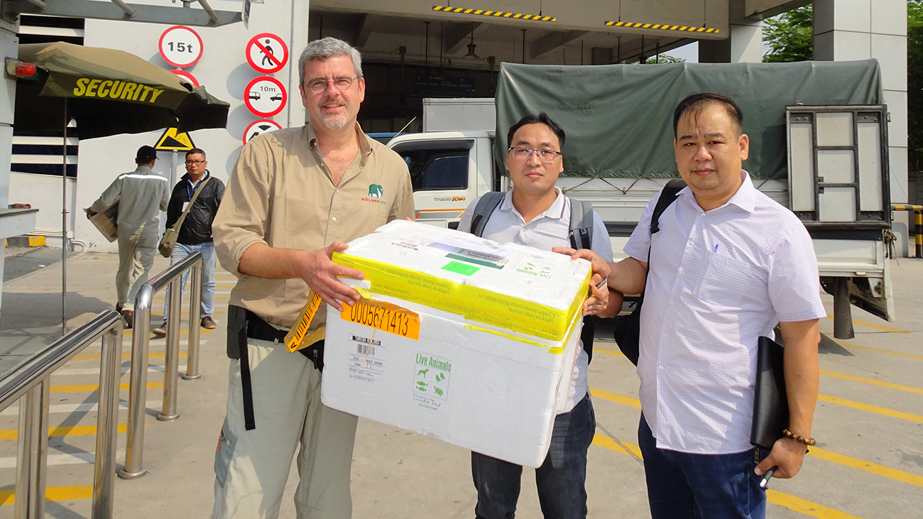 Receiving crocodile newts shipped by a special company at Hanoi Airport | Melinh Station