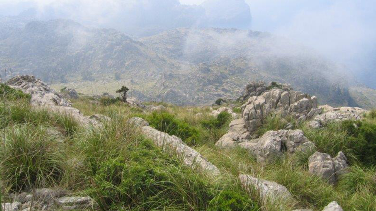 Die Serra de Tramuntana auf Mallorca vermittelt ein idyllisches Bild, doch in ihren Schluchten kämpft ein lebendes Fossil ums nackte Überleben. | Dawn Fleming/Durrell Wildlife Conservation Trust
