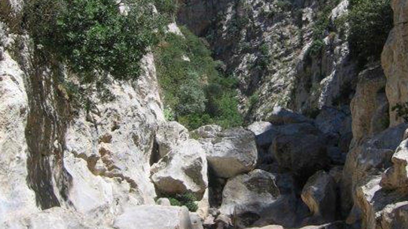 In den verborgenen, tiefen Schluchten der Serra finden die Mallorca-Geburtshelferkröten ihren letzten Rückzugsraum in freier Natur | Dawn Fleming/Durrel Wildlife Conservation Trust